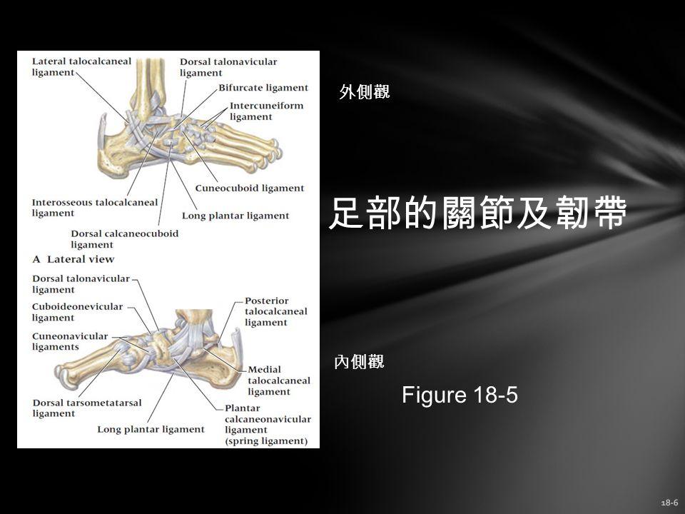 18-6 足部的關節及韌帶 Figure 18-5 外側觀 內側觀