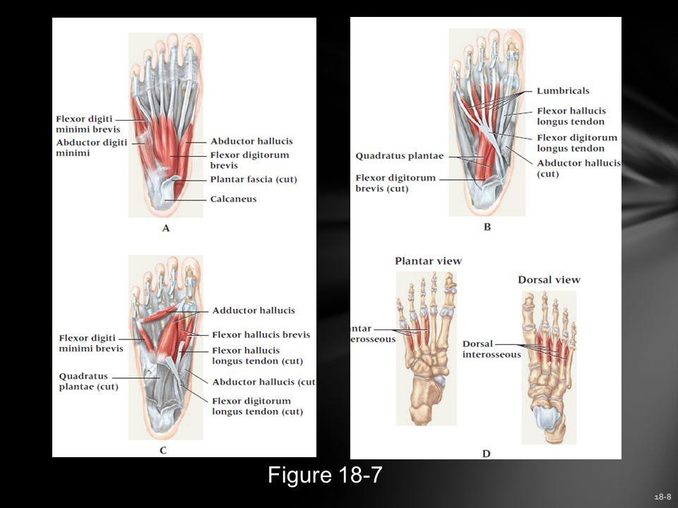 18-8 Figure 18-7