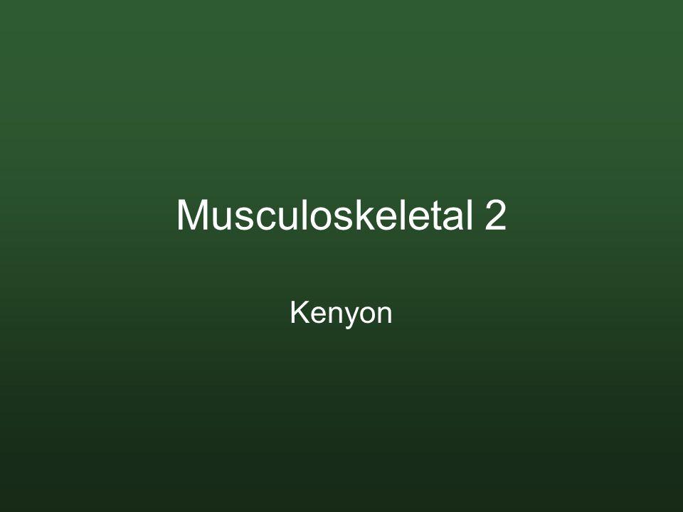 Musculoskeletal 2 Kenyon
