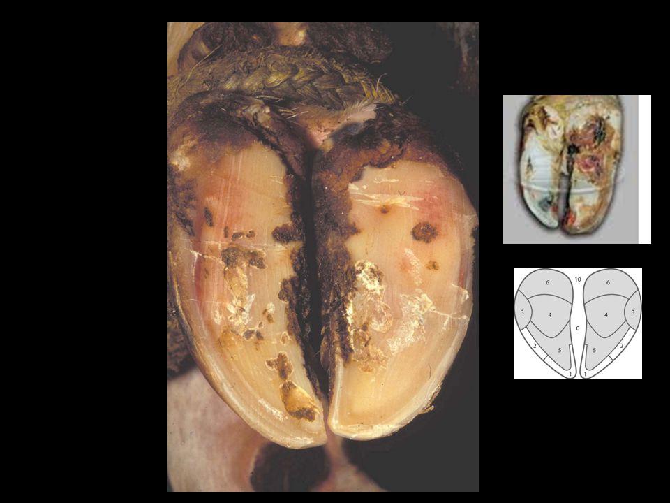 Under-run Sole and Hemorrhage