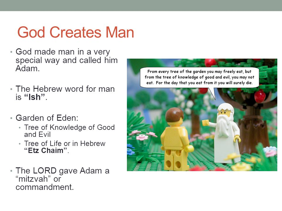 God Creates Man God made man in a very special way and called him Adam.