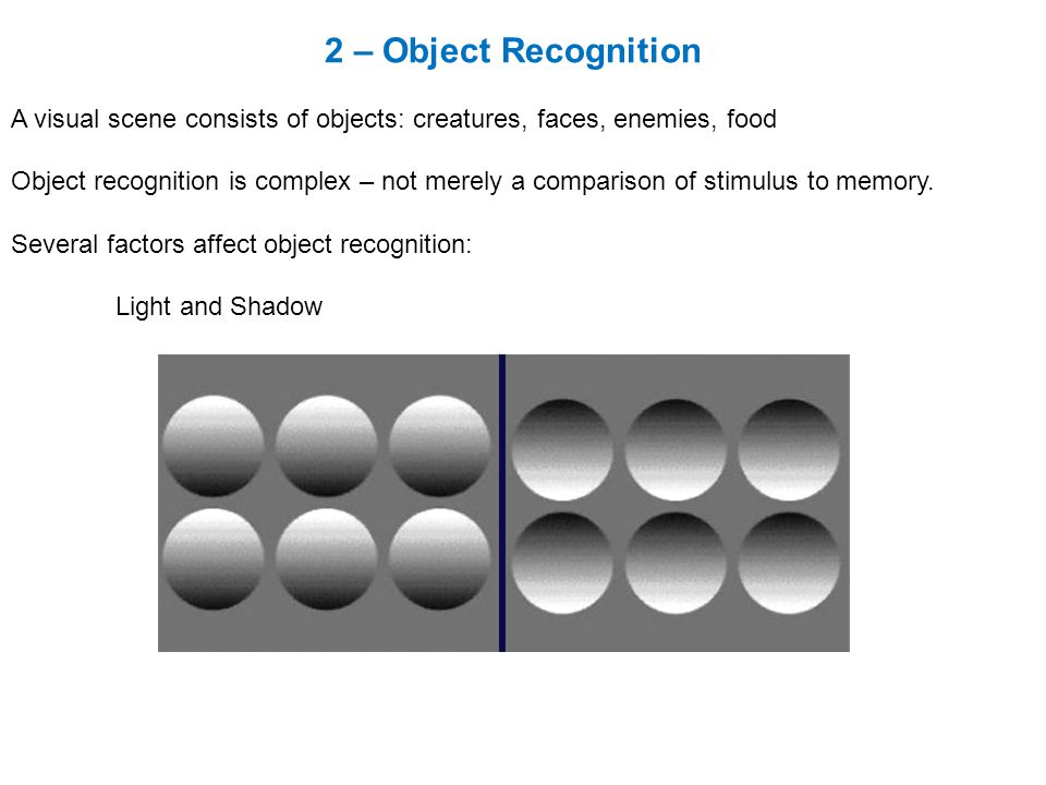 2 – Object Recognition A visual scene consists of objects: creatures, faces, enemies, food Object recognition is complex – not merely a comparison of stimulus to memory.