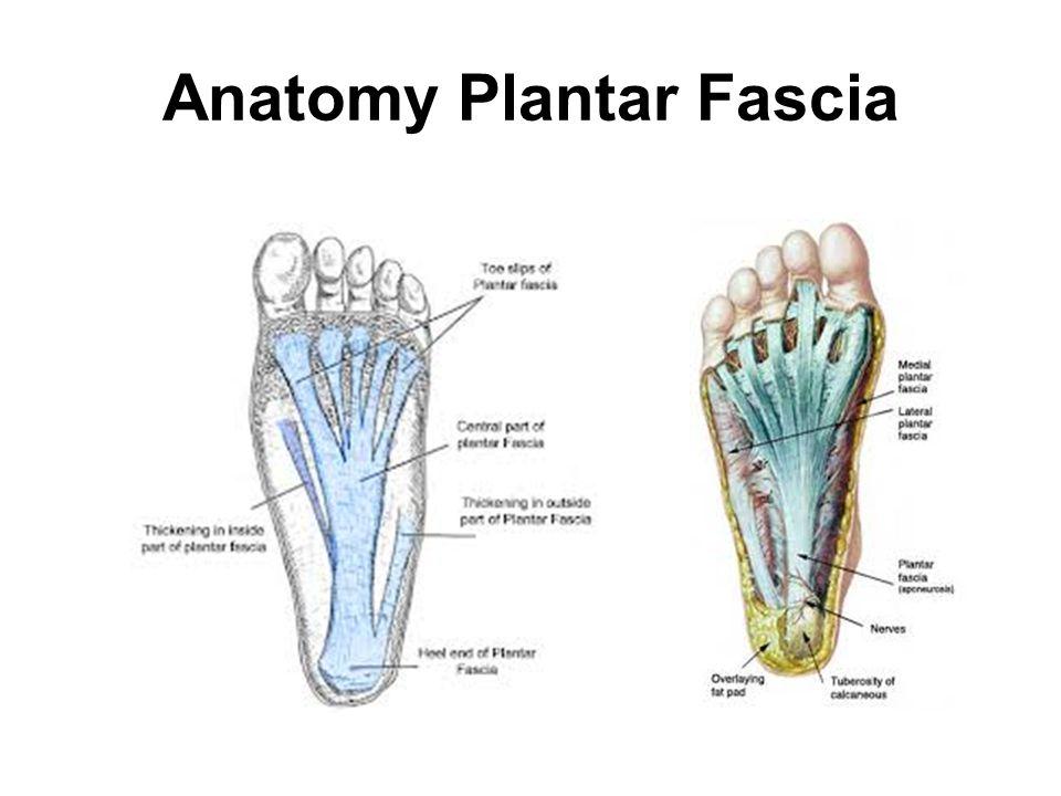 Anatomy Plantar Fascia