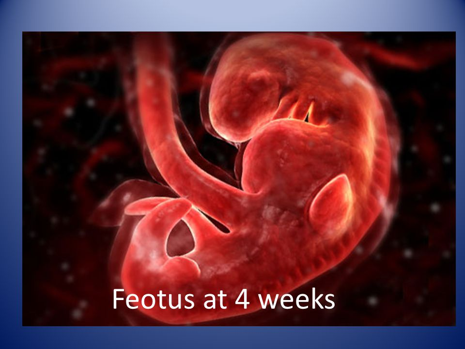 Feotus at 4 weeks
