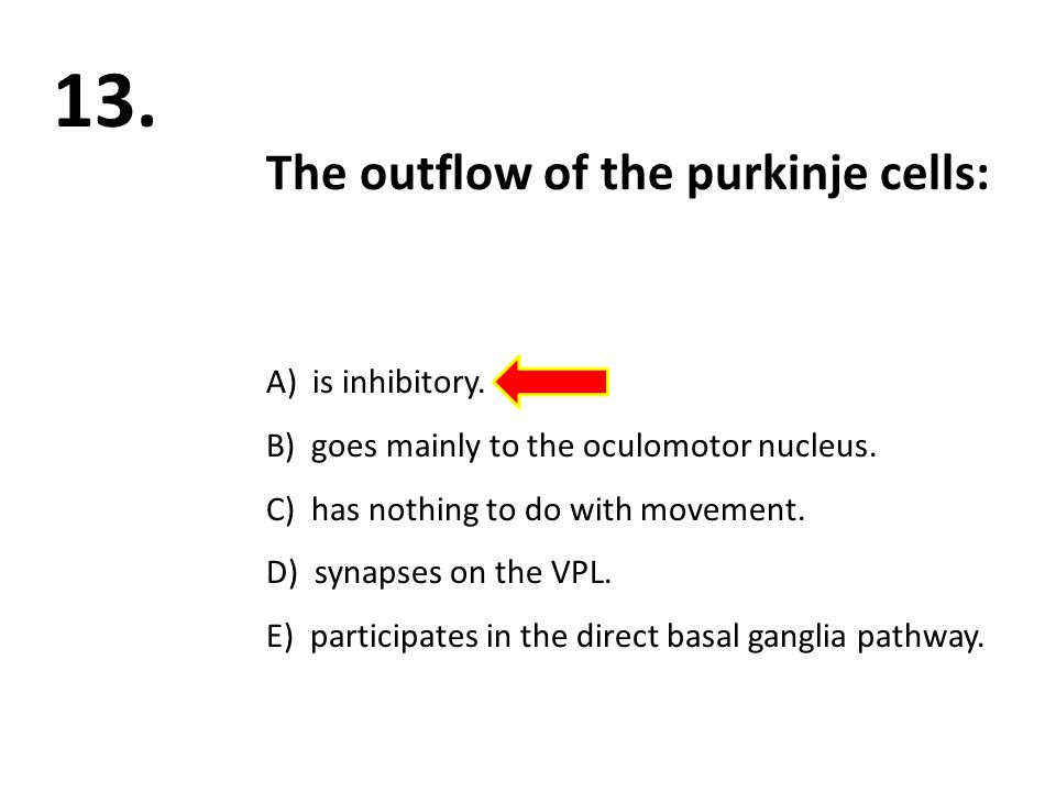 The outflow of the purkinje cells: A) is inhibitory. B) goes mainly to the oculomotor nucleus. C) has nothing to do with movement. D) synapses on the