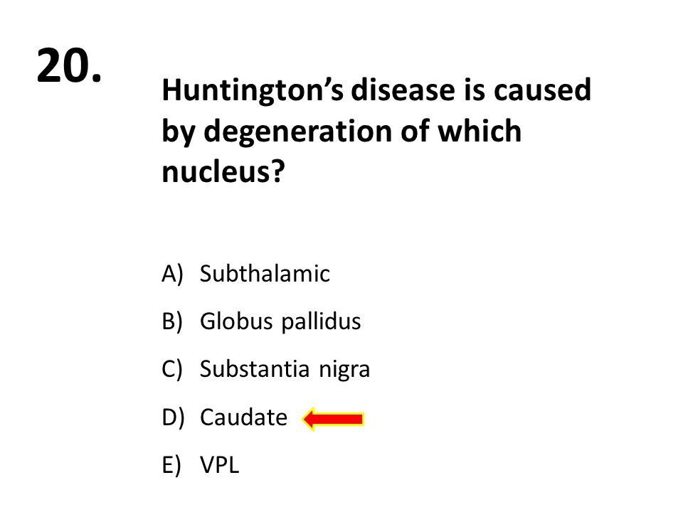 20. Huntington's disease is caused by degeneration of which nucleus.