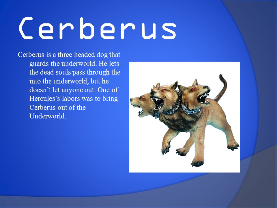 Cerberus Cerberus is a three headed dog that guards the underworld.