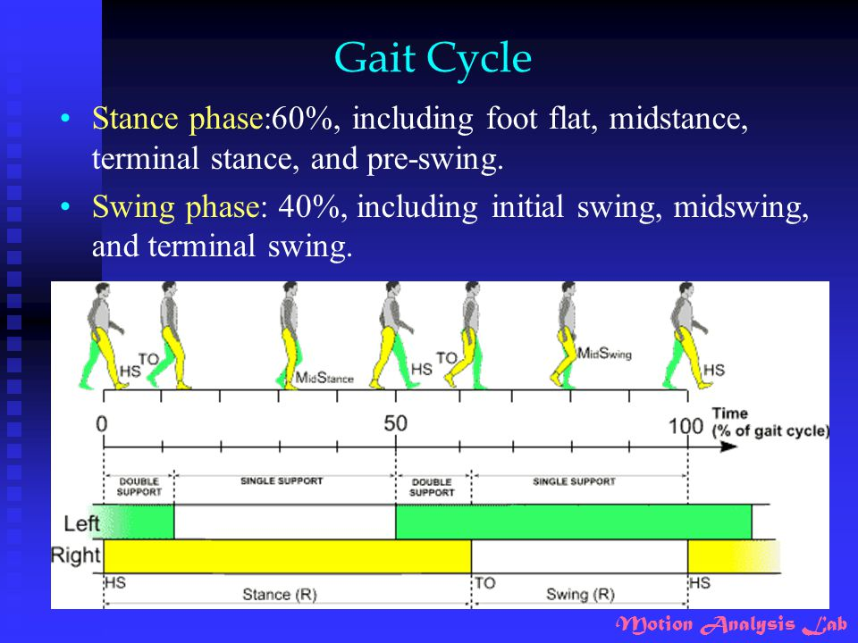 Motion Analysis Lab Gait Cycle Stance phase:60%, including foot flat, midstance, terminal stance, and pre-swing. Swing phase: 40%, including initial s