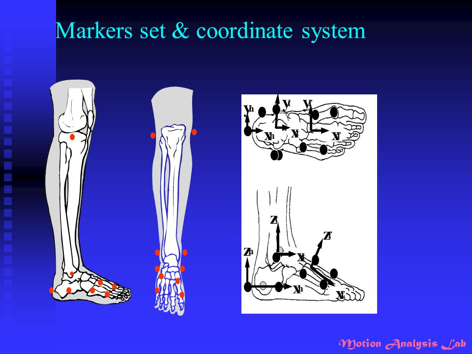 Motion Analysis Lab Markers set & coordinate system x f z f x h x t x f x t x h z t z h y f y t y h