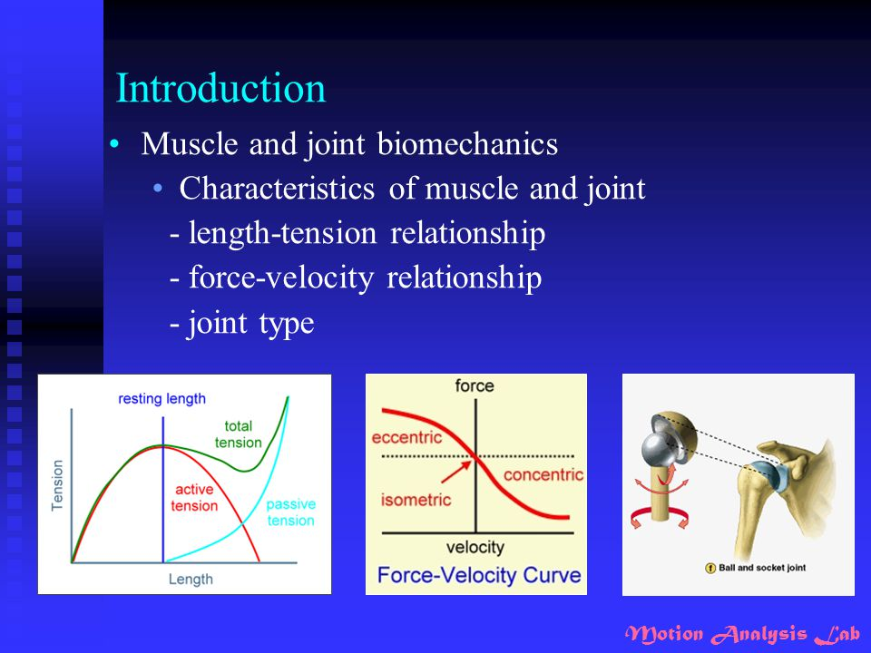 Motion Analysis Lab Results _ muscle activities