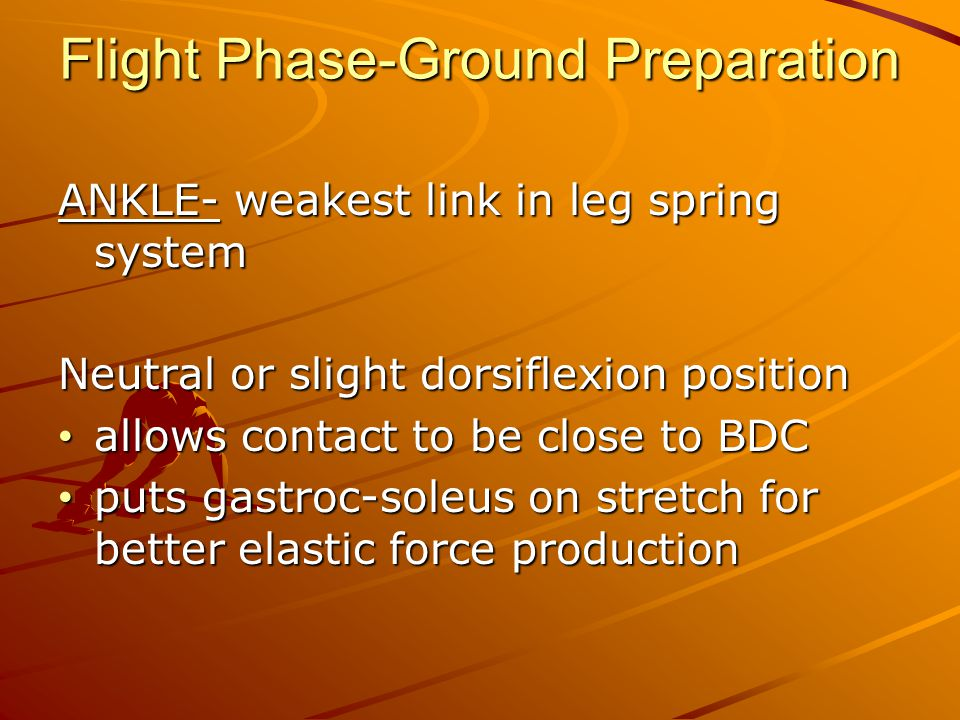 Flight Phase-Ground Preparation ANKLE- weakest link in leg spring system Neutral or slight dorsiflexion position allows contact to be close to BDC allows contact to be close to BDC puts gastroc-soleus on stretch for better elastic force production puts gastroc-soleus on stretch for better elastic force production