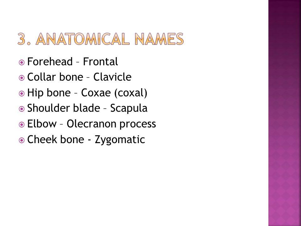  Forehead – Frontal  Collar bone – Clavicle  Hip bone – Coxae (coxal)  Shoulder blade – Scapula  Elbow – Olecranon process  Cheek bone - Zygomat