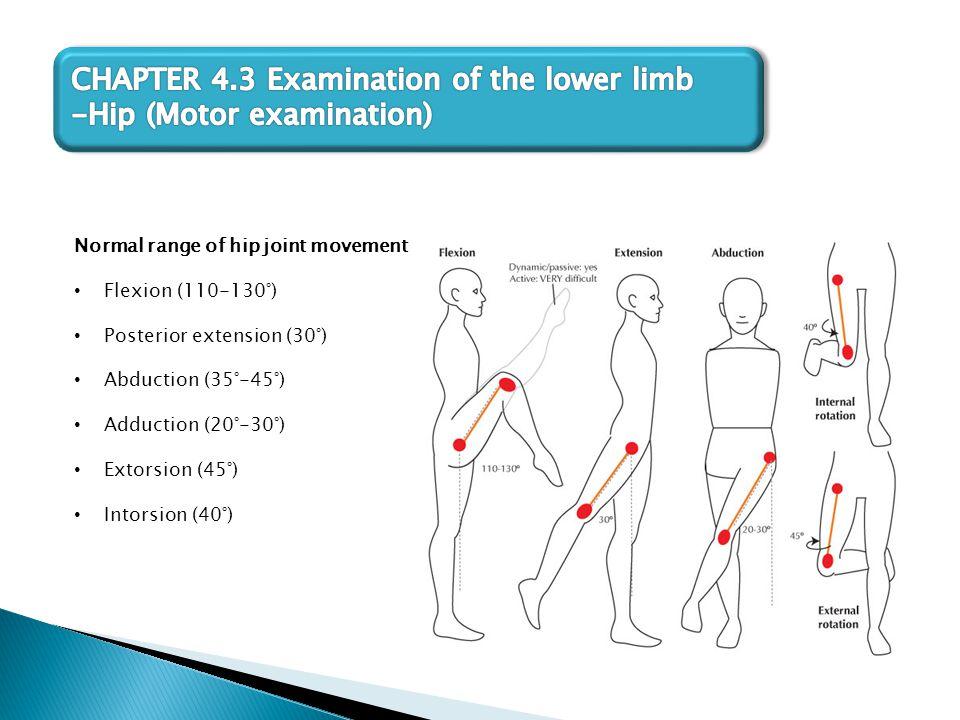 Normal range of hip joint movement Flexion (110-130°) Posterior extension (30°) Abduction (35°-45°) Adduction (20°-30°) Extorsion (45°) Intorsion (40°)