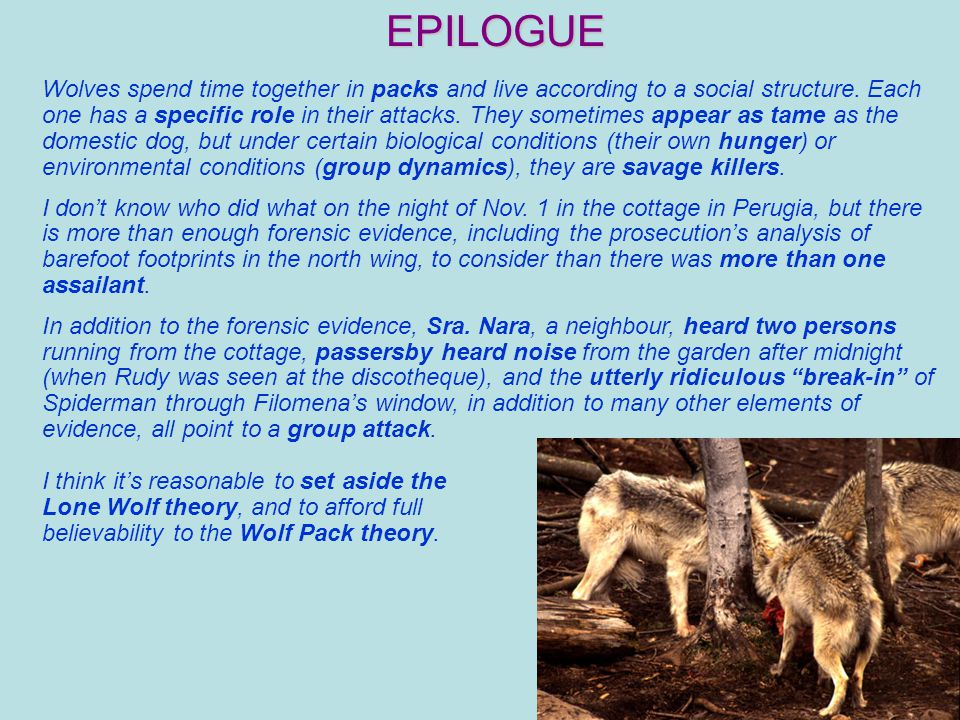 EPILOGUE Wolves spend time together in packs and live according to a social structure.