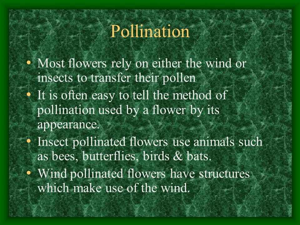 Pollination Most flowers rely on either the wind or insects to transfer their pollen It is often easy to tell the method of pollination used by a flower by its appearance.