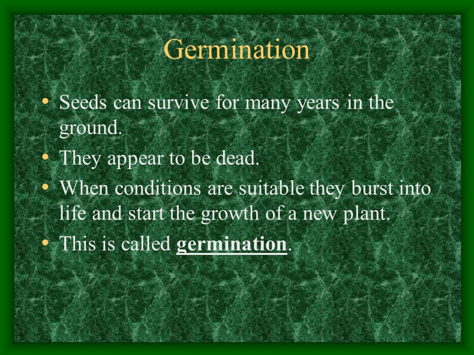 Germination Seeds can survive for many years in the ground.