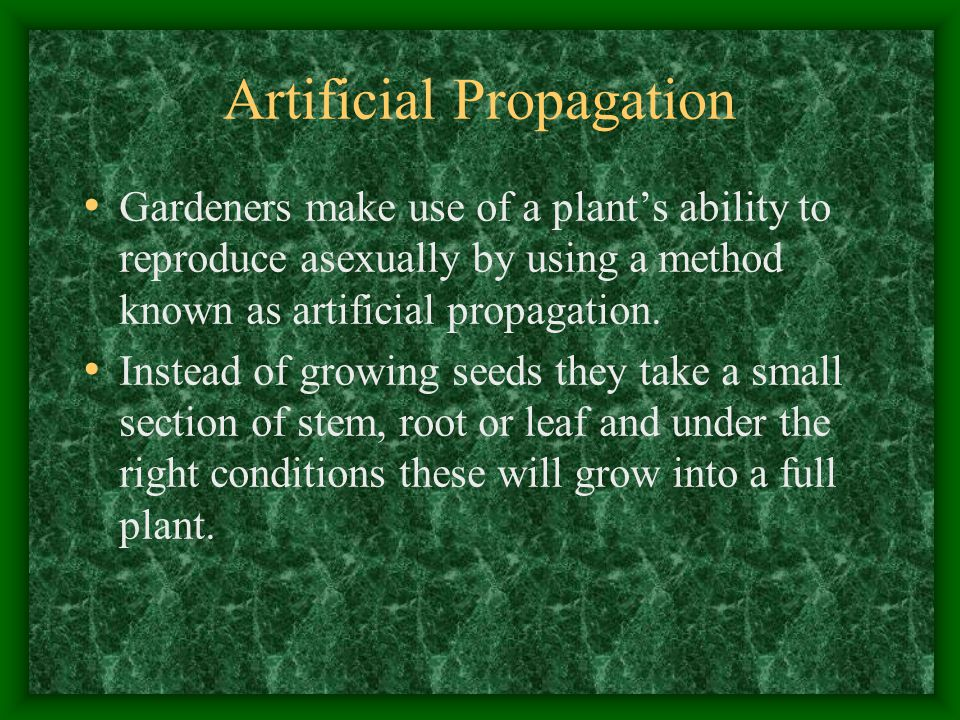 Artificial Propagation Gardeners make use of a plant's ability to reproduce asexually by using a method known as artificial propagation.