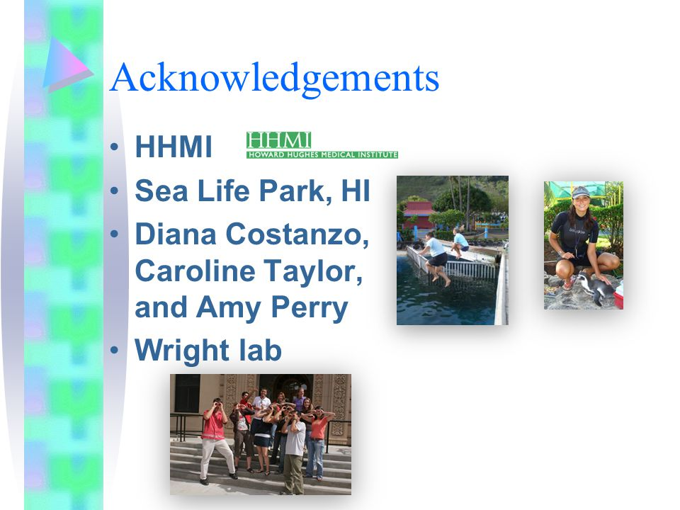 Acknowledgements HHMI Sea Life Park, HI Diana Costanzo, Caroline Taylor, and Amy Perry Wright lab