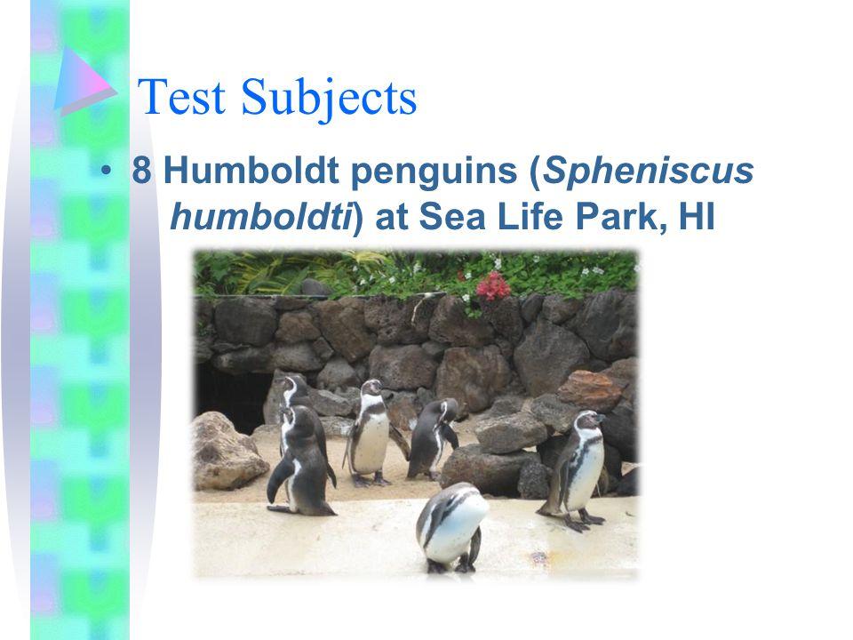 Test Subjects 8 Humboldt penguins (Spheniscus humboldti) at Sea Life Park, HI