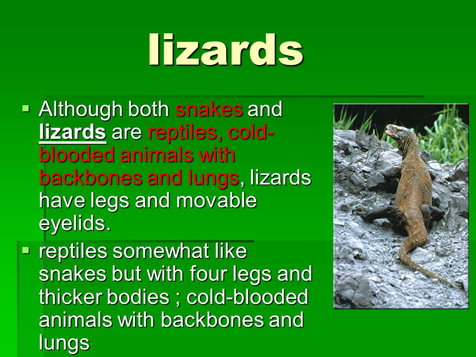 harshest  Komodo dragons come from the Komodo Island area of Indonesia, near the northwest shore of Australia.