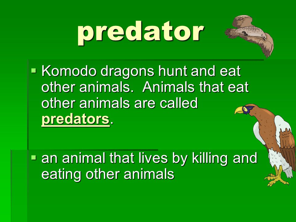 monitor  Komodo lizards are a type of lizard called a monitor.
