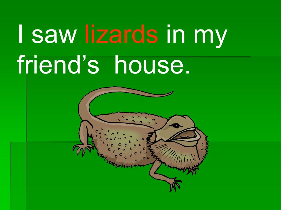 I saw lizards in my friends house.