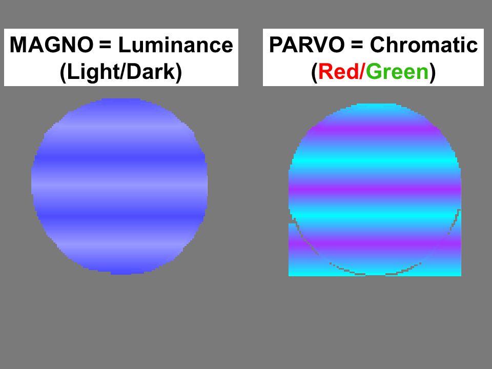 MAGNO = Luminance (Light/Dark) PARVO = Chromatic (Red/Green)