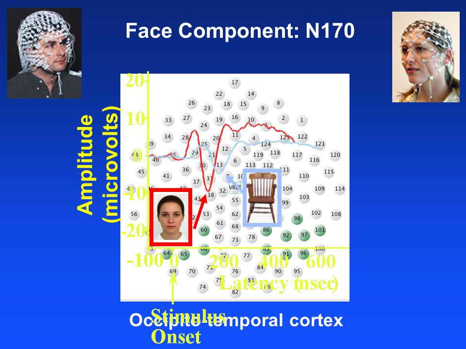 Averaged electrical response time-locked to repeated picture presentations Face Component: N170 Occipito-temporal cortex Amplitude (microvolts) - -