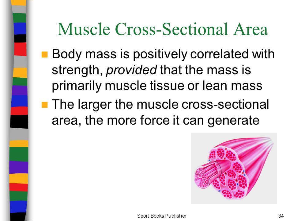 Sport Books Publisher34 Muscle Cross-Sectional Area Body mass is positively correlated with strength, provided that the mass is primarily muscle tissu