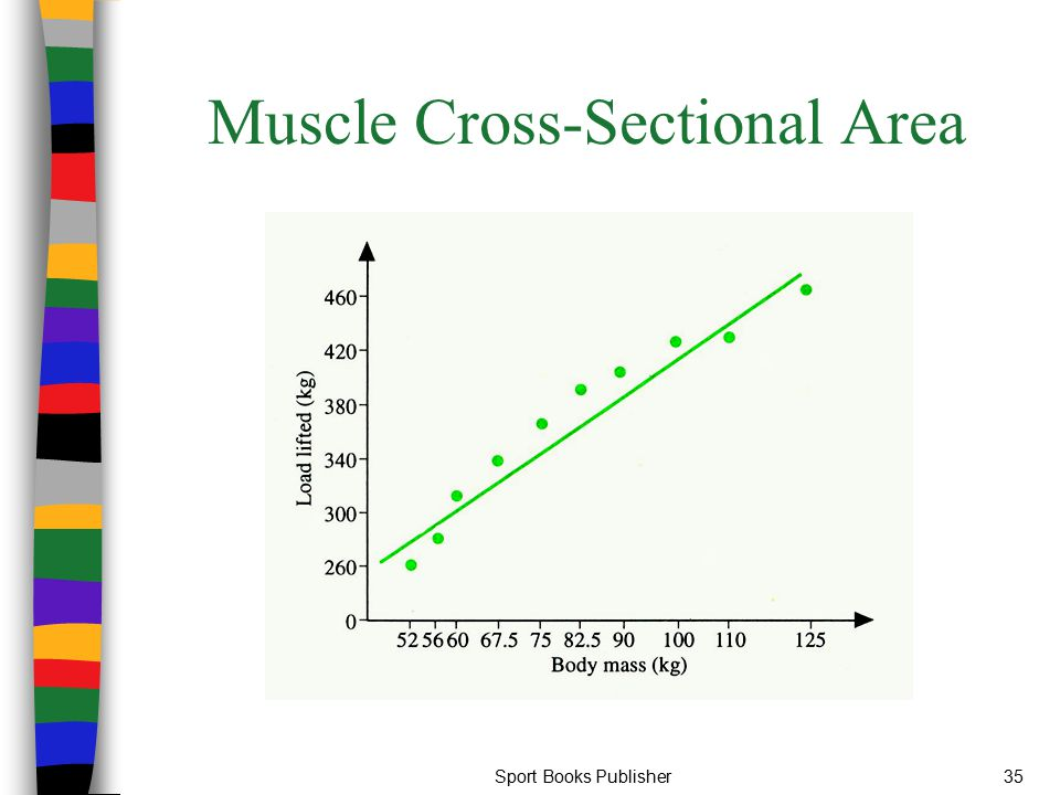 Sport Books Publisher35 Muscle Cross-Sectional Area