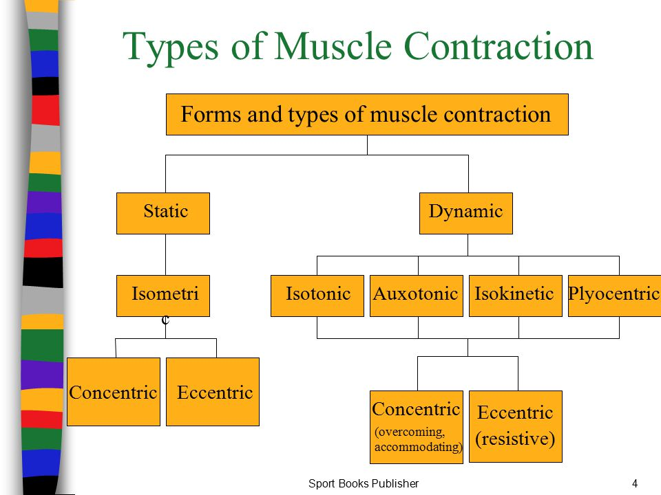 Sport Books Publisher15 Dynamic Contraction Muscle tension or force is exerted against an external load Internal force exerted is greater than the external load Visible movement of the external load occurs