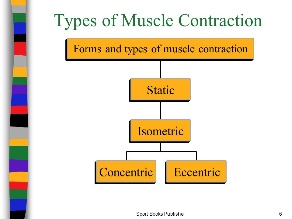 Sport Books Publisher57 The Relationship Between Maximal Strength and Power Development of maximal strength through increased intra-muscular coordination