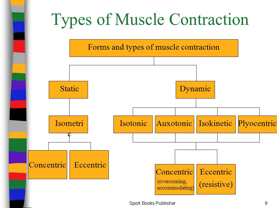 Sport Books Publisher9 Types of Muscle Contraction ConcentricEccentric Isometri c Static IsotonicAuxotonicIsokinetic Plyocentric Concentric (overcomin
