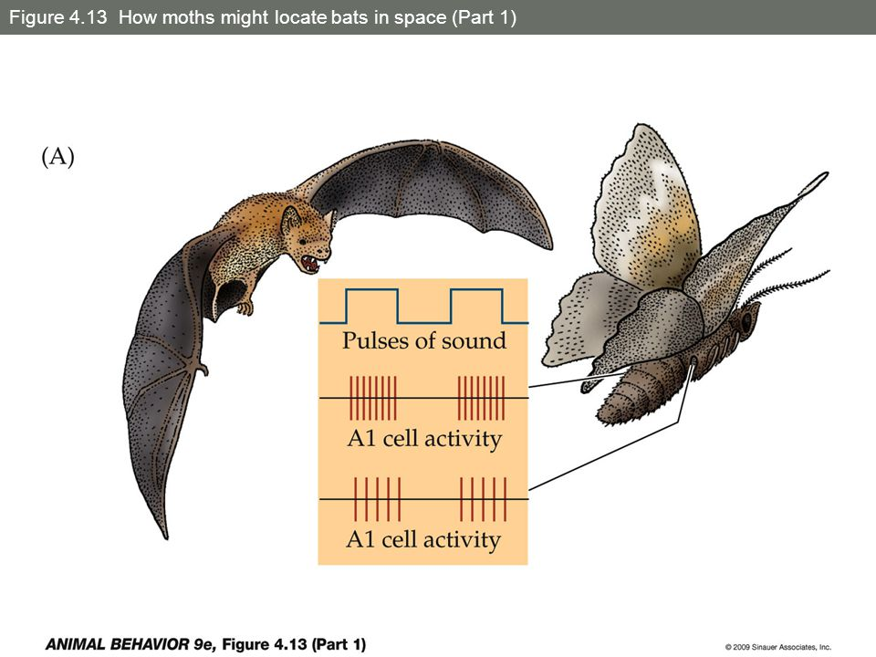 Figure 4.13 How moths might locate bats in space (Part 1)