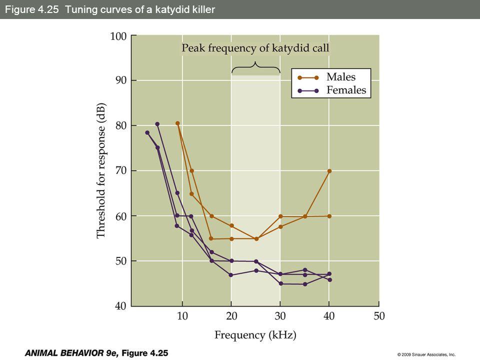 Figure 4.25 Tuning curves of a katydid killer