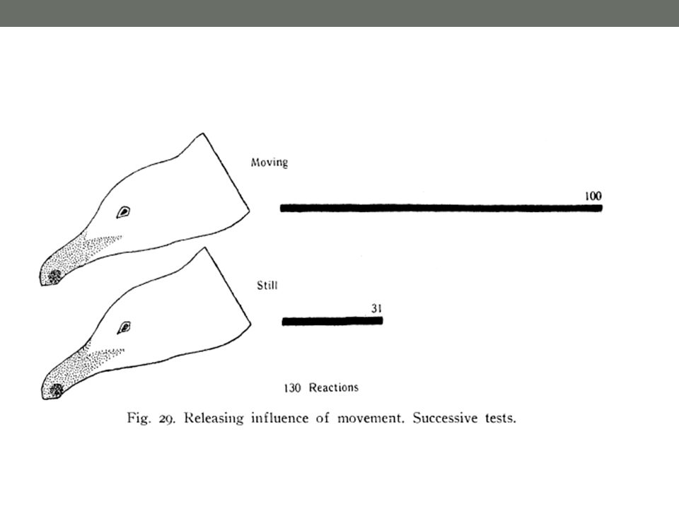 Figure 4.15 Is the A2 cell necessary for anti-interception behavior by moths? (Part 1)