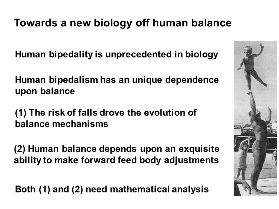 Human bipedality is unprecedented in biology Human bipedalism has an unique dependence upon balance (1) The risk of falls drove the evolution of balance mechanisms (2) Human balance depends upon an exquisite ability to make forward feed body adjustments Both (1) and (2) need mathematical analysis Towards a new biology off human balance