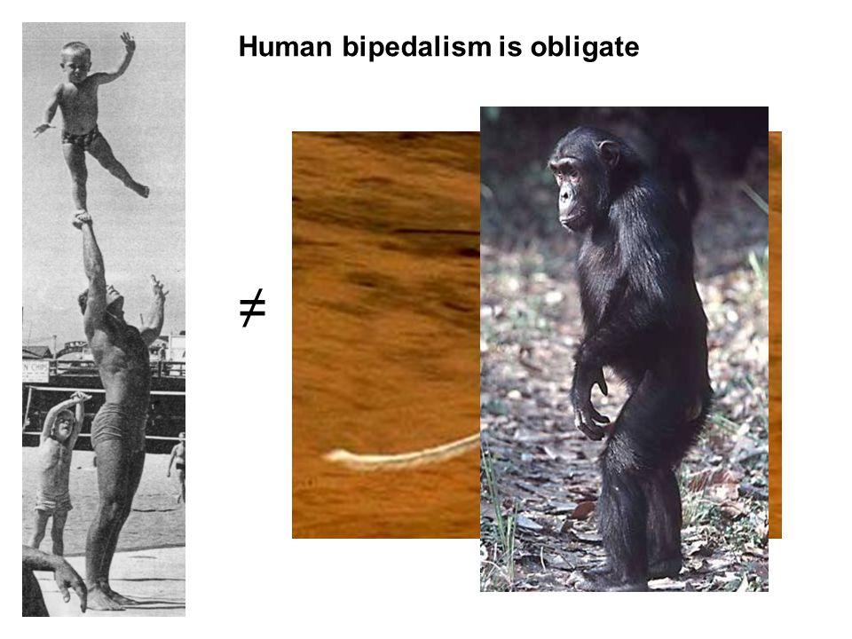 ≠ Human bipedalism is obligate