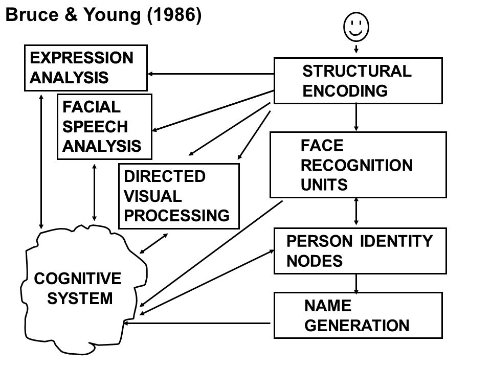 STRUCTURAL ENCODING FACE RECOGNITION UNITS PERSON IDENTITY NODES NAME GENERATION COGNITIVE SYSTEM EXPRESSION ANALYSIS FACIAL SPEECH ANALYSIS DIRECTED