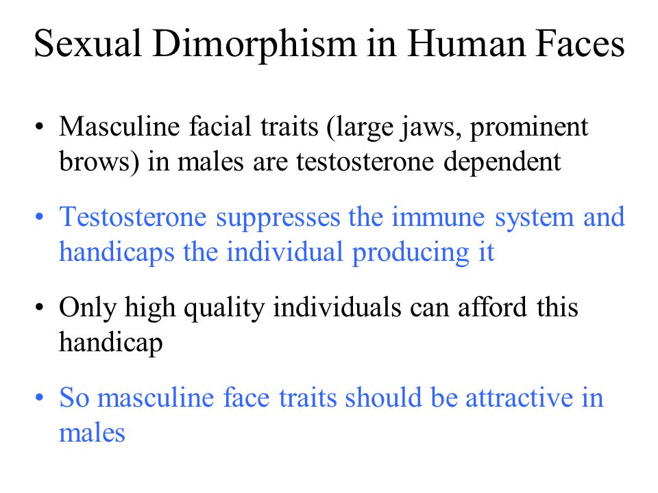 Sexual Dimorphism in Human Faces Masculine facial traits (large jaws, prominent brows) in males are testosterone dependent Testosterone suppresses the