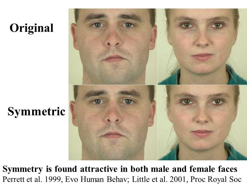 Symmetry is found attractive in both male and female faces Perrett et al. 1999, Evo Human Behav; Little et al. 2001, Proc Royal Soc Original Symmetric