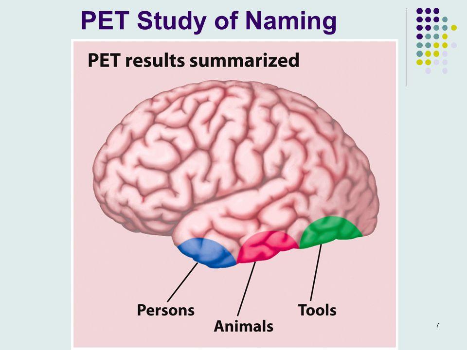 PET Study of Naming 7