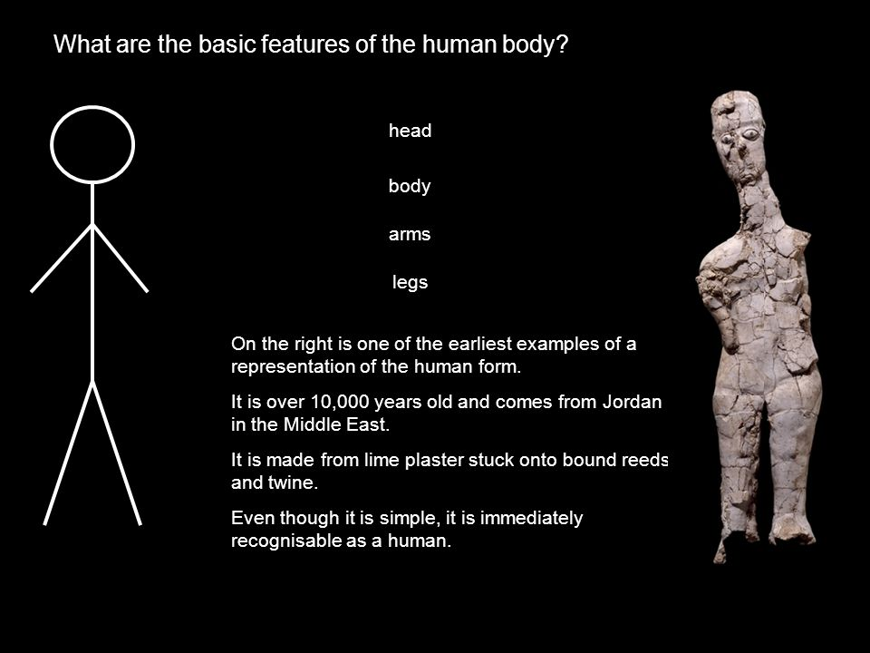 What are the basic features of the human body.