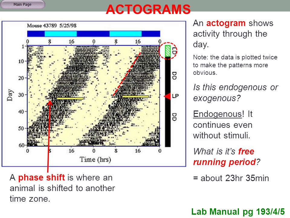 ACTOGRAMS A phase shift is where an animal is shifted to another time zone. Lab Manual pg 193/4/5 An actogram shows activity through the day. Note: th