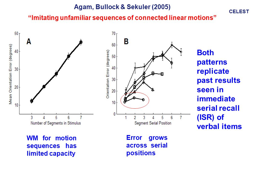 CELEST Agam, Bullock & Sekuler (2005) Imitating unfamiliar sequences of connected linear motions WM for motion sequences has limited capacity Both patterns replicate past results seen in immediate serial recall (ISR) of verbal items Error grows across serial positions