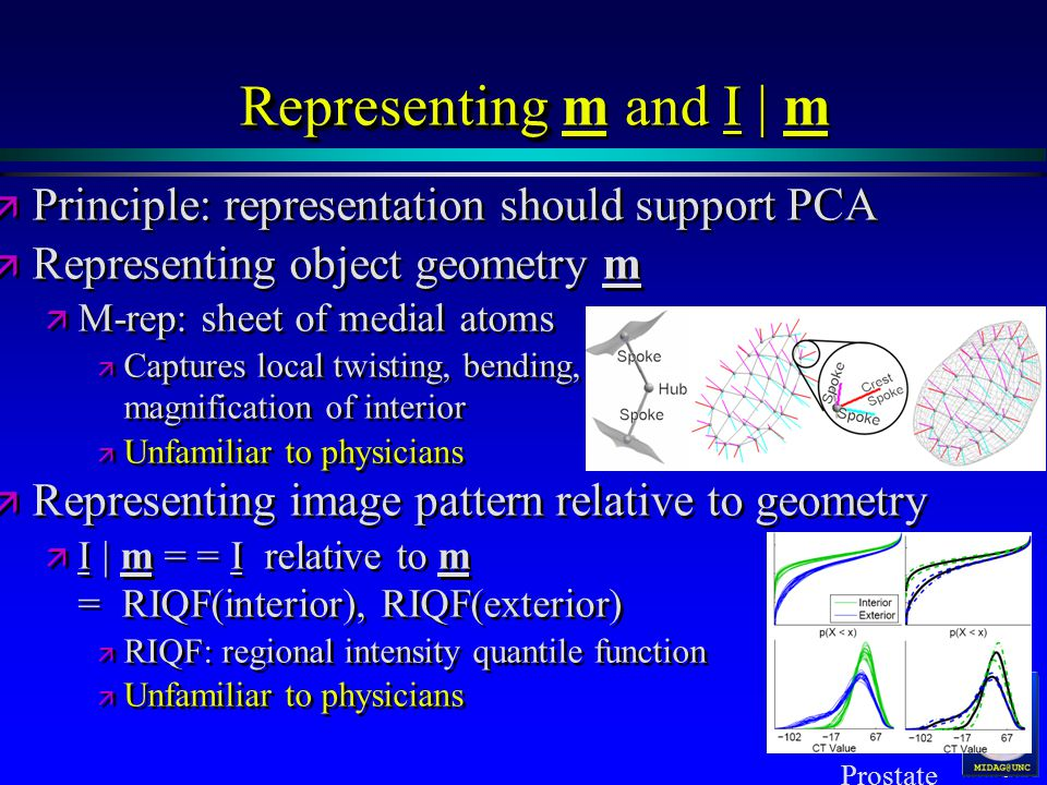 MIDAG@UNC Representing Representing m and I | m ä ä Principle: representation should support PCA ä ä Representing object geometry m ä ä M-rep: sheet of medial atoms ä ä Captures local twisting, bending, magnification of interior ä ä Unfamiliar to physicians ä ä Representing image pattern relative to geometry ä ä I | m = = I relative to m = RIQF(interior), RIQF(exterior) ä ä RIQF: regional intensity quantile function ä ä Unfamiliar to physicians ä ä Principle: representation should support PCA ä ä Representing object geometry m ä ä M-rep: sheet of medial atoms ä ä Captures local twisting, bending, magnification of interior ä ä Unfamiliar to physicians ä ä Representing image pattern relative to geometry ä ä I | m = = I relative to m = RIQF(interior), RIQF(exterior) ä ä RIQF: regional intensity quantile function ä ä Unfamiliar to physicians Prostate