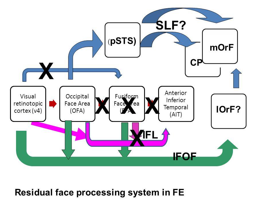 Visual retinotopic cortex (v4) Occipital Face Area (OFA) Fusiform Face Area (FFA) Anterior Inferior Temporal (AIT) ( pSTS) mOrF SLF? CP lOrF? IFL IFOF