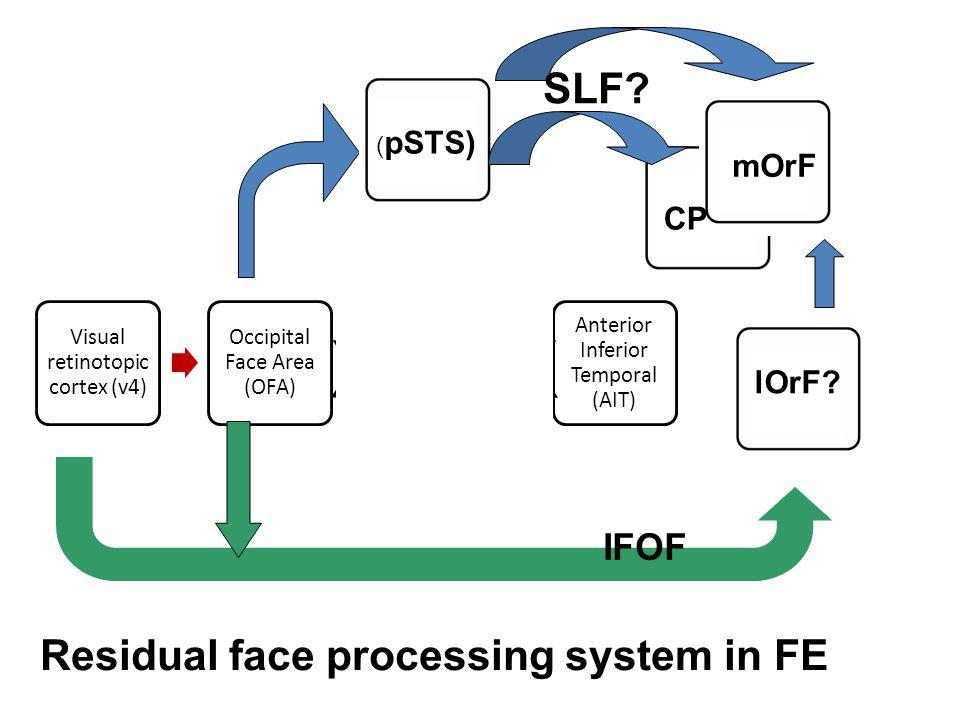 Visual retinotopic cortex (v4) Occipital Face Area (OFA) Fusiform Face Area (FFA) Anterior Inferior Temporal (AIT) ( pSTS) mOrF SLF? CP lOrF? IFOF Res