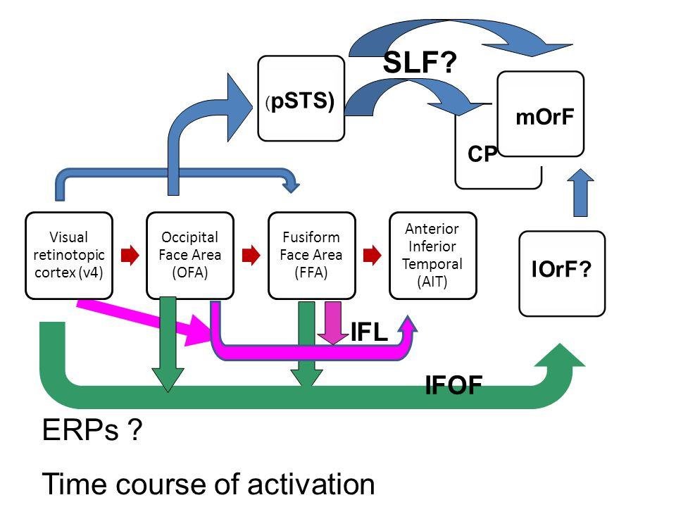 Visual retinotopic cortex (v4) Occipital Face Area (OFA) Fusiform Face Area (FFA) Anterior Inferior Temporal (AIT) ( pSTS) mOrF ERPs ? Time course of