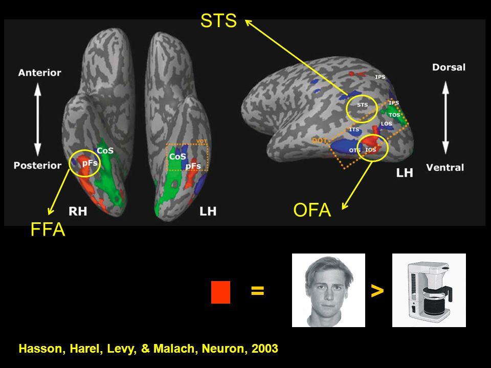FFA OFA Hasson, Harel, Levy, & Malach, Neuron, 2003 => STS